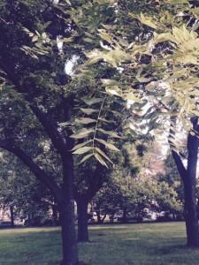Trees North of Stuart